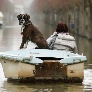 Koira ja nainen veneessä Pariisissa tulvan peittämällä kadulla.