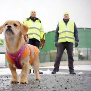 Työtaistelukoira Orvokki sekä Teemu Kurki ja Harri Auvinen lakkovahteina John Deeren Joensuun tehtaan pihassa.