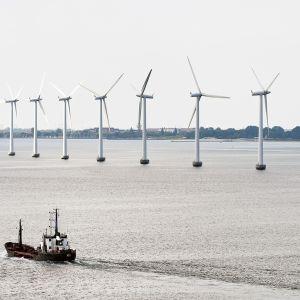 Tuulivoimapuisto Juutinraumassa Tanskassa.