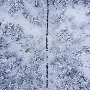 Suo-oja kulkee lumisen suometsän lävitse.