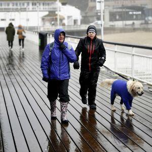 Pariskunta ulkoiluttaa koiraa myrskysäässä.