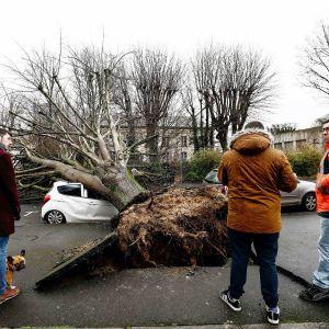 Ihmiset katsovat myrskyn kaatamaa puuta Ranskan Caenissa.