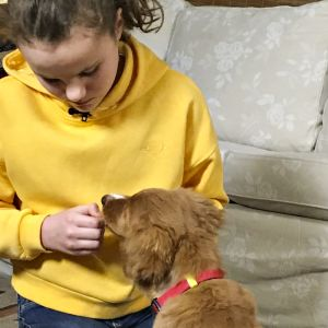 Nimeä kannattaa opettaa koiralle ruuan avulla.