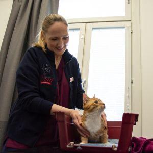 Eläinlääkäri Pamela Kvarngård ja eläintenhoitaja Saara Turunen tutkivat Illi-kissan vointia.