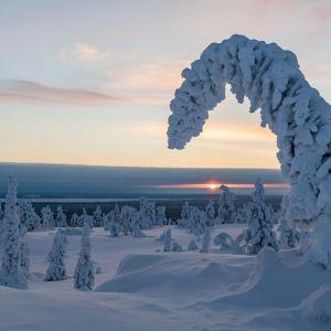 Lumen painamia puita ja matalalla paistava Aurinko.