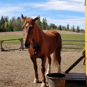 Hevonen ja vesiastia