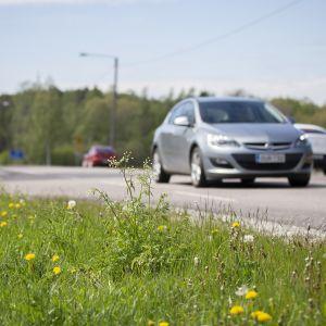 kesäinen maantie jossa autoja