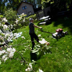 Nainen leikkaa pihamaan nurmikkoa aurinkoisessa säässä