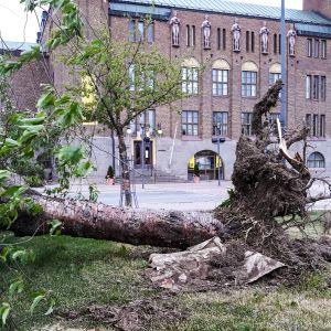Myrsky teki tuhojaan uusitussa Joensuun Vapaudenpuistossa.