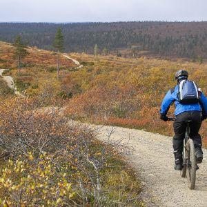 Pyöräilijä  Urho kekkosen kansallispuistossa.