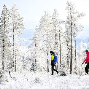 Retkeilijöitä aurinkoisena pakkaspäivänä Pallas-Yllästunturin kansallispuistossa.