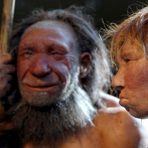 Neandertalinihmisen malleja.