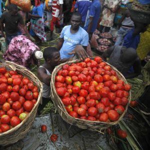 Miehet purkavat tomaattikoreja kuorma-auton lavalta Lagosin ruokamarkkinoilla Nigeriassa.