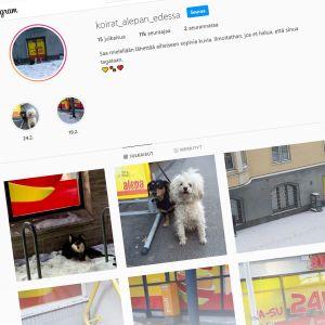 koirat_alepan_edessä-tilin etusivu