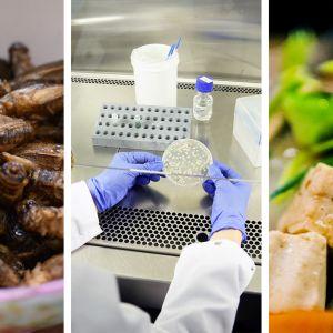 Erilaisia ruoka-aineita:  hyönteisiä, laboratoriovalkuaista ja kasvisruokaa