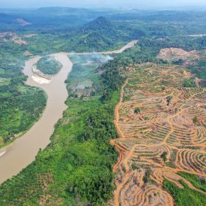 Palmuöljyplantaaseja hakattua metsää Indonesiassa.