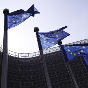 Liput liehuvat komission rakennuksen edustalla.