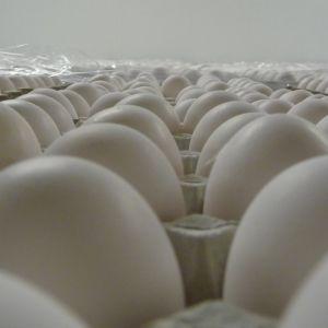 Kurikkaselän tilalla on 250 000 kananmunaa.