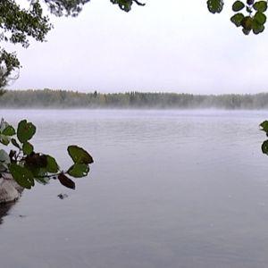 Maisemaa Savitaipaleelta Kuolimojärven itärannalta Partakosken kohdalta.