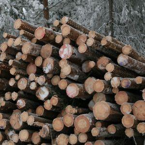 Puukaupan odotetaan vilkastuvan kevään aikana.