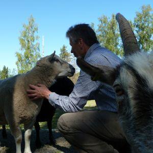 Mies rapsuttaa lammasta, etualalla pukki katsoo kameraan.