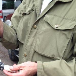 Miehellä on kädessään merikotkan rengastusrenkaat.