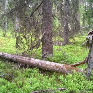 Puolangan Tulijoen luonnonsuojelukohde.