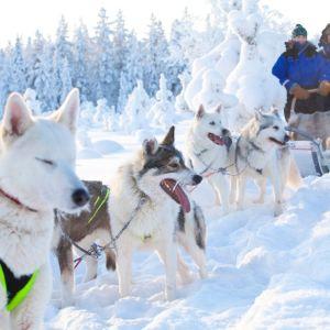 Koiria vetämässä koiravaljakkoa lumisessa maisemassa.