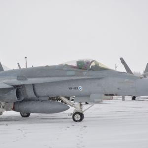 Hornetit kentällä lumisessa maisemassa.