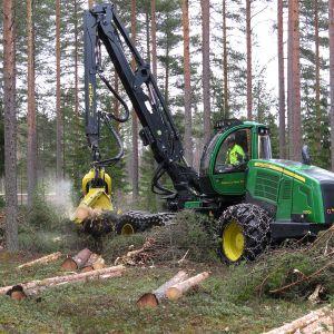 Metsäkone katkoo puuta männikössä.