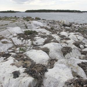 Hävitetty merimetsojen pesimäluoto Luvialla