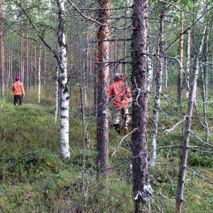 Thaipoimijoita metsässä