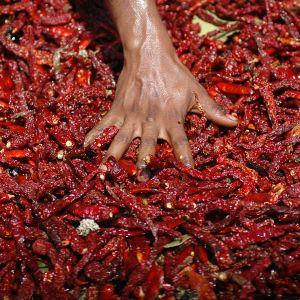 Kuivattua punaista chiliä.