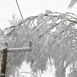 Luminen puu taipuneena sähkölinjan päälle