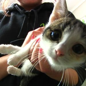 Pikkuinen kissanpoika Herne on utelias kaveri.