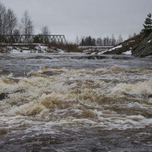 Ylistaron Malkakoskessa vesi kuohuu pelotellen helmikuisella tulvalla.