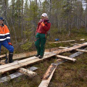Kenttäpäällikkö Olli Vainio Metsähallituksesta ja talkoolaiset pitkospuita rakentamassa.