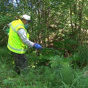 Puistotyöntekijä ruiskuttamassa torjunta-ainetta