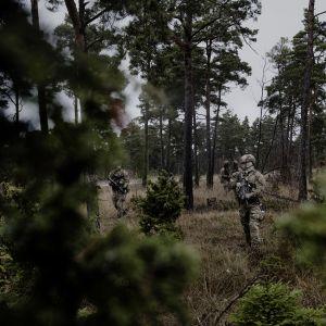 Ruotsin erikoisjoukot harjoituksissa Gotlannissa marraskuussa 2015. Raskaasti aseistautuneita sotilaita havumetsässä.
