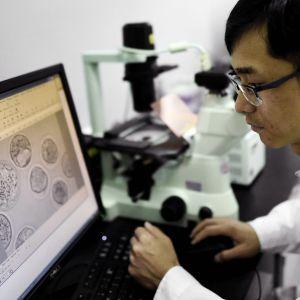 Tutkija katsoo mikroskoopin kuvaa päätteeltä.