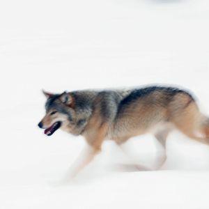 susi lumessa