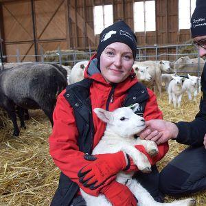 Mies rapsuttaa naisen sylissä olevaa karitsaa lampolassa