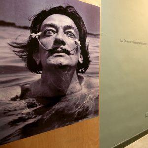 Mustavalkoinen kuva Dalista taidemuseon seinällä. Taiteilija katsoo silmät suurena, kukkaset viiksiensä kärjissä.