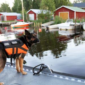 Koira veneen kannella