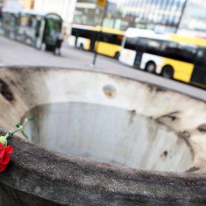 Punainen ruusu asetettuna suuren kukkaruukun reunalle.