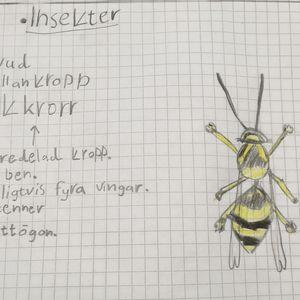 Vaasalaisessa kielikylpyluokassa ympäristötiedon hyönteisosuus opiskellaan ruotsiksi.