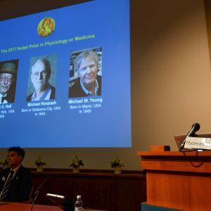 Lääketieteen Nobel-palkinnon jakavat Jeffrey C. Hall (vas.), Michael Rosbash (kesk.) ja Michael W. Young (oik.).