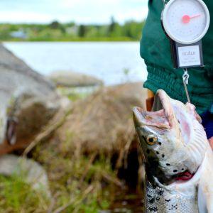 Lohenkalastusta Tornionjoella