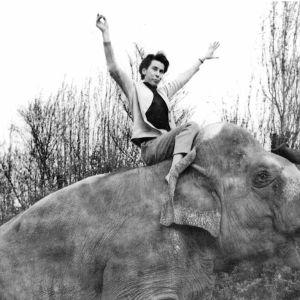 Tove Jansson elefantin selässä.