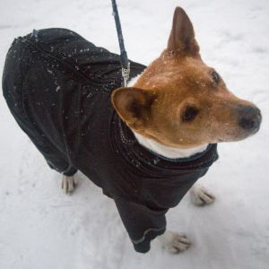 Koira, Talvi, Tampere